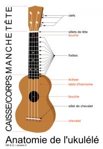 anatomie ukulele